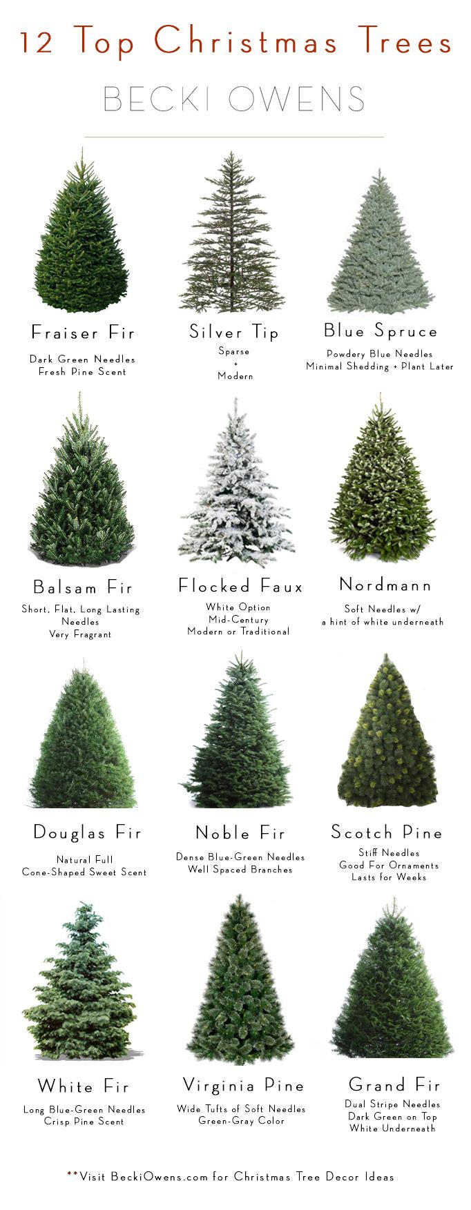 12 top christmas trees