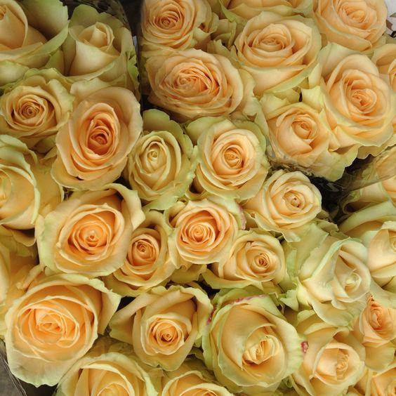'Peach Avalanche' - FlowerMonger