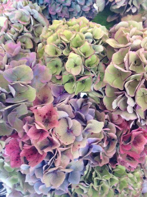 botanicalbrouhaha