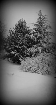 Snow fall!