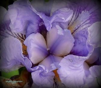 Iris! 517201501