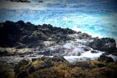 Point Cabrillo 321201510