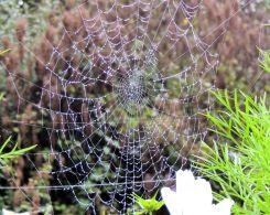 Webs03