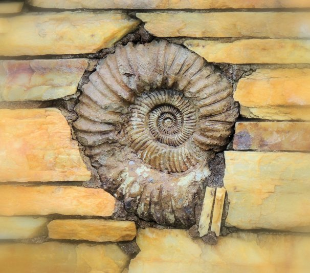 Ammonite In the Wall: Top 20% award for the day of 2/7/16...