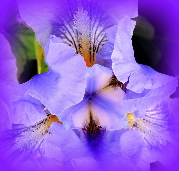 Purpled Iris: Top 20% for the day of 1/31/16...