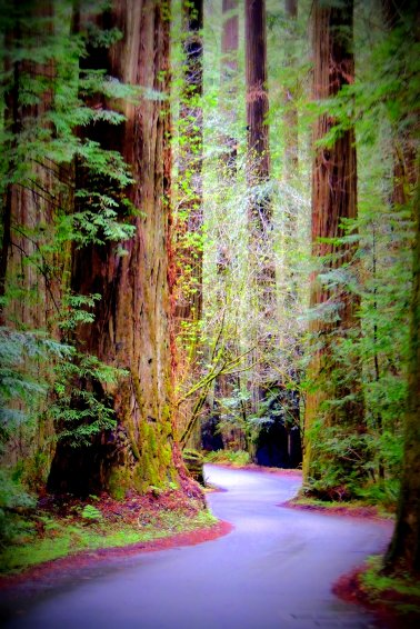 Winding Through the Redwoods: Top 20% for the day of 1/22/16...
