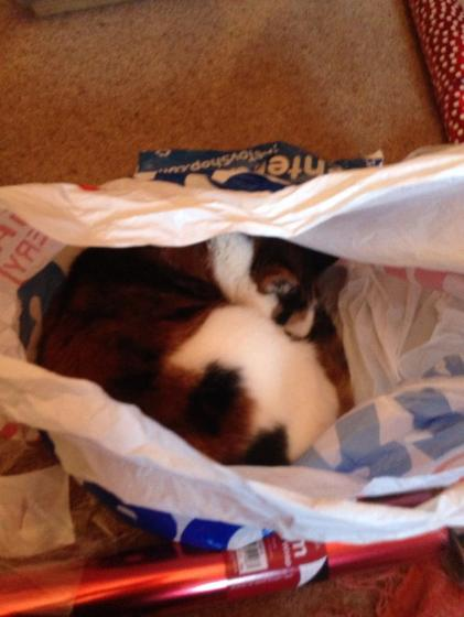 My cat is more interested in sleeping in plastic bags than creating masterpieces