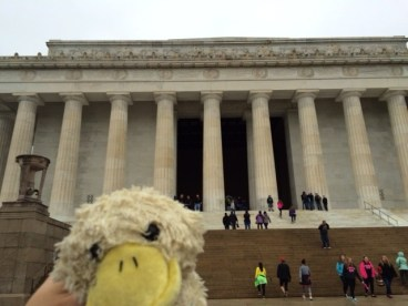 Duckie enjoying the sights