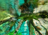 SEA LIFE Aquarium (12)