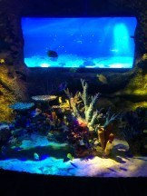 SEA LIFE Aquarium (3)