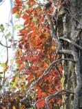 Gorgeous ivy