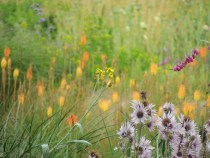 Meadows at Wisley