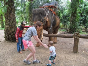 he isn't sure about this elephant