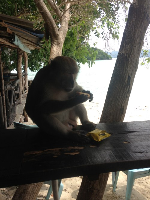 not gonna lie when this monkey was angry and was showing his teeth i was a little freaked out...