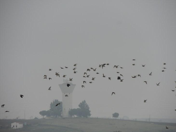 A foggy Campo Branco