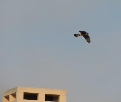 Chimney fly by
