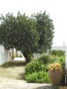 Garden in the middle of Corte das Donas