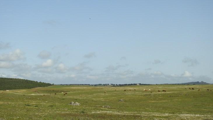 The steppe in Alentejo