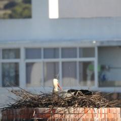 Nesting!
