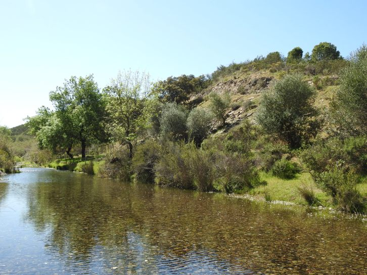 An oasis