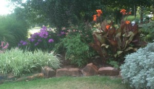 Cannas, ribbon grass artemesia and garden phlox
