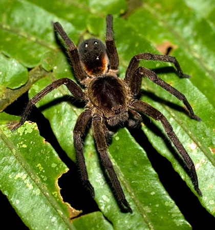 Jumping spiders, you say? Why it's a bad idea to research ... - photo#19