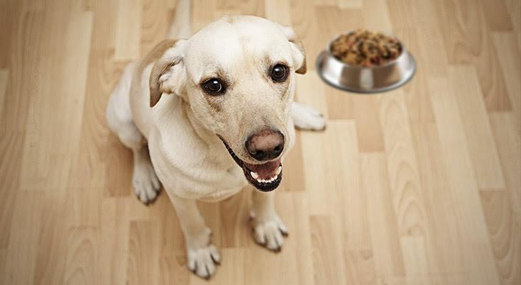 Aplicativo Beagle