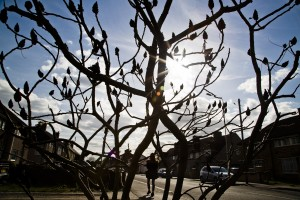 Branches in Backlight. Photo by AF Rodrigues
