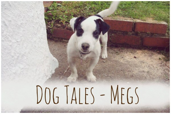 Dog Tales Megs Jack Russell Terrier