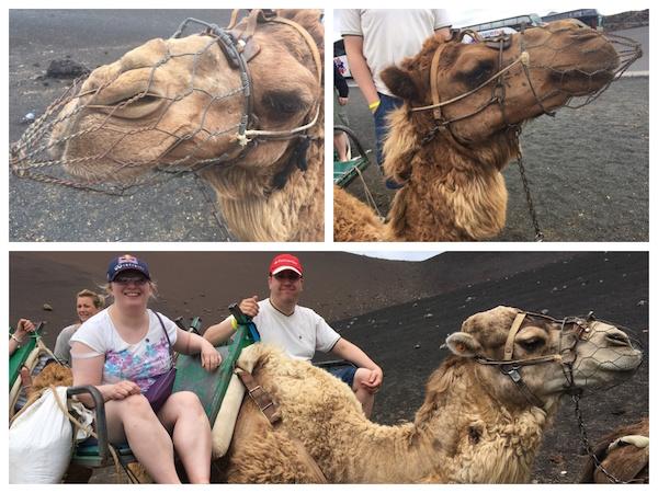Camels at TimanFaya Lanzarote