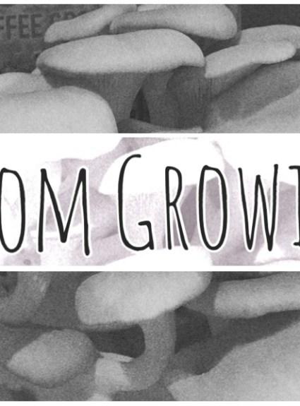 GroCycle Mushroom Growing Kit Review