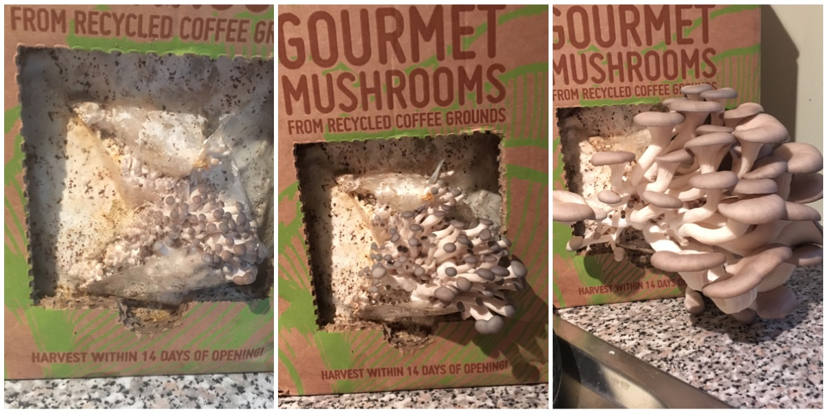 GroCycle Mushroom Growing Kit