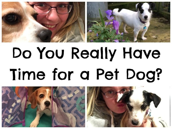 Do You Really Have Time for a Pet Dog
