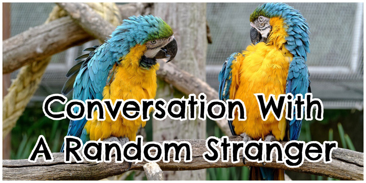 Header image for the post with a photo of two parrots talking