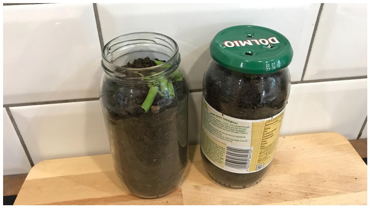 Old Dolmio jars being used as wormeries