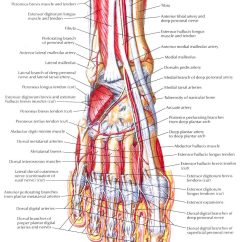 Top Of Foot Pain Diagram Wiring For 1 Light With 2 Switches Hip Elsavadorla