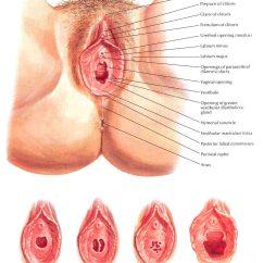 Massage Technique Diagram Cmos Camera Wiring Deep Vulva Xxgasm