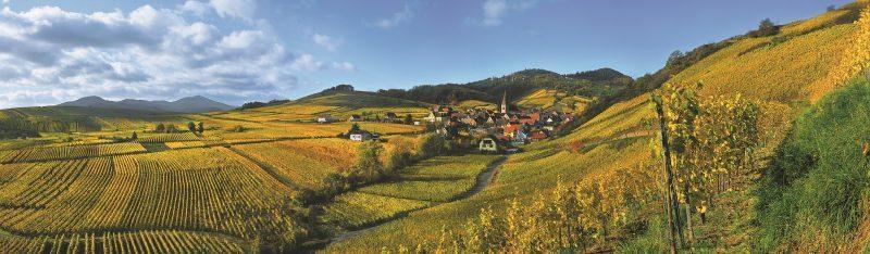 France : route des vins d'Alsace