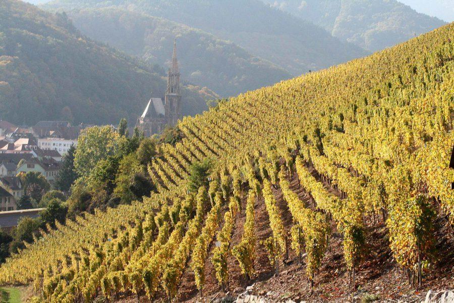 France vignobles en Alsace