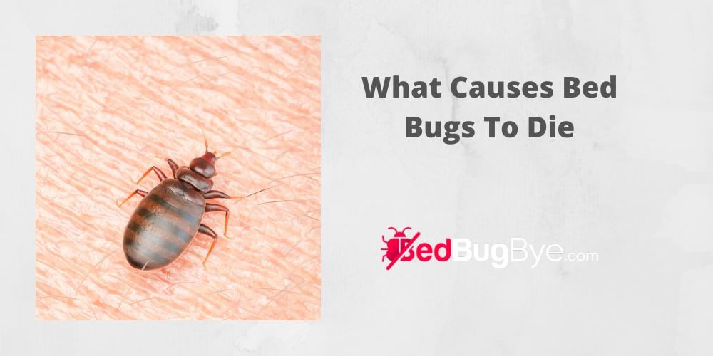 What Causes Bed Bugs To Die Bed Bug Bye