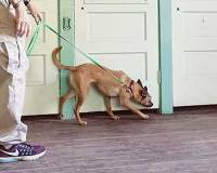 Detection Dog Training Bed Bugs Human Remains Nosework ...