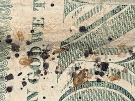 U.S. one dollar bill with bed bug eggs, shed skins and excrement on it. Dead Bug Walkin LLC