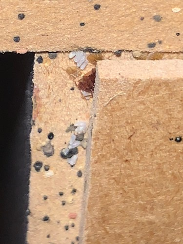 Just because they are called bed bugs doesn't mean they are only on beds! Picture shows bed bugs, eggs and shed skins on the back a night stand.