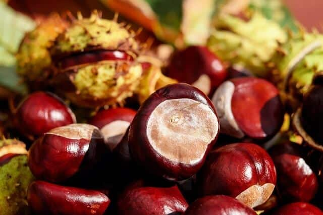 Try Chestnuts to Keep Spiders Away