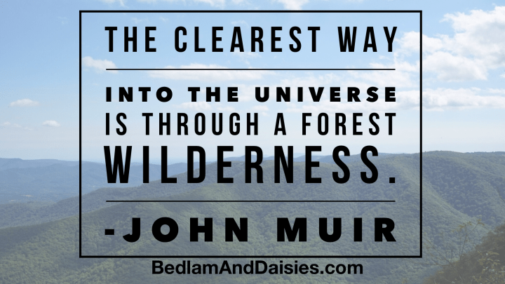 The clearest way into the universe is through a forest wilderness.- John Muir