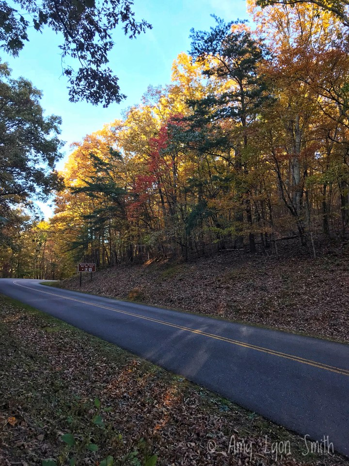 Fall trees in the Blue Ridge Mountains