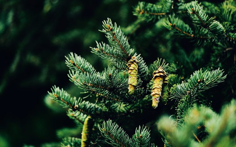 Pine Bark and ADHD: Does It Help?