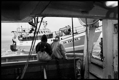Sardientjes vissen