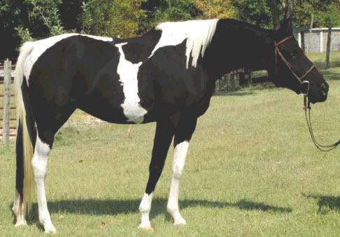 milkshake the magical pony