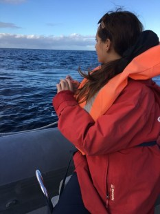 azores-3-whale-watching
